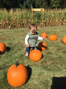 Figuring out how the heck she is going to pick up that pumpkin. Or eat it.